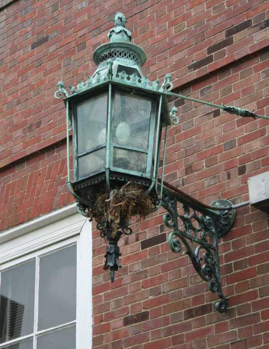House sparrow nest in an exterior light on a brick building.
