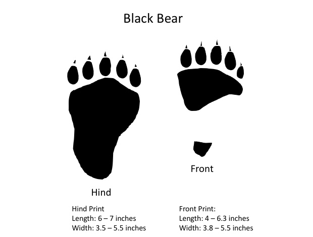 Graphic showing bear tracks.