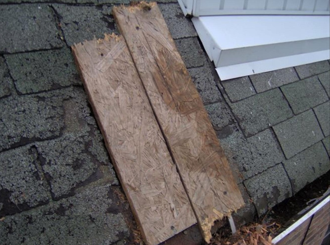 Boards can be temporarily installed over a hole to keep animals from using the site. Be sure there are no animals inside before putting up boards or making the final roof repair.