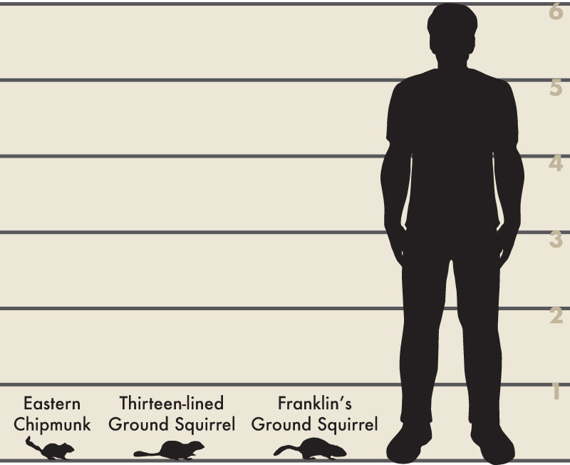 Man and ground squirrels illsutration