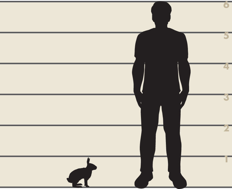 Man and rabbit illustration