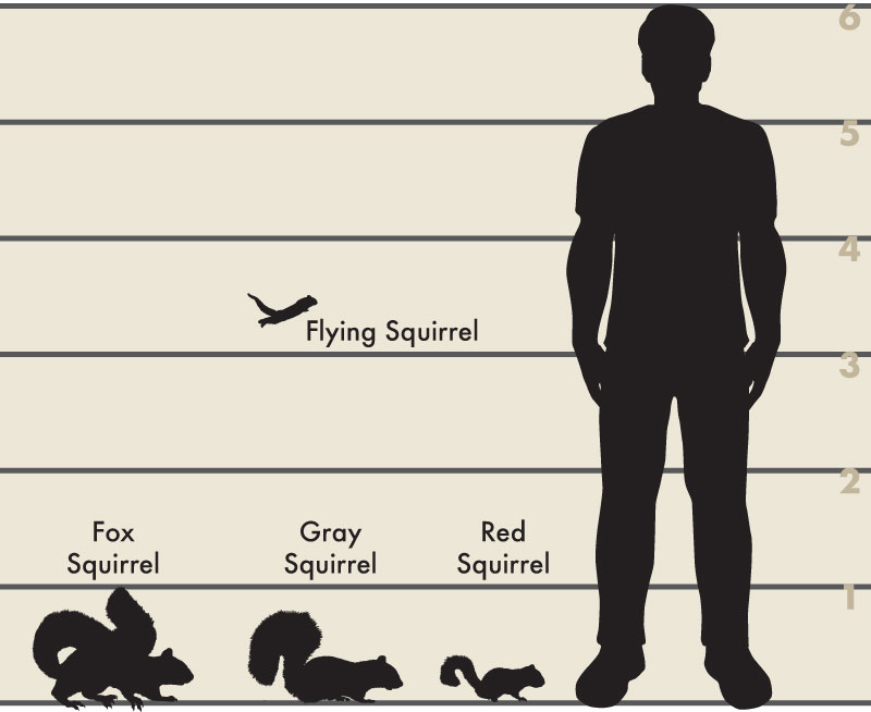 Man and tree squirrel illustration