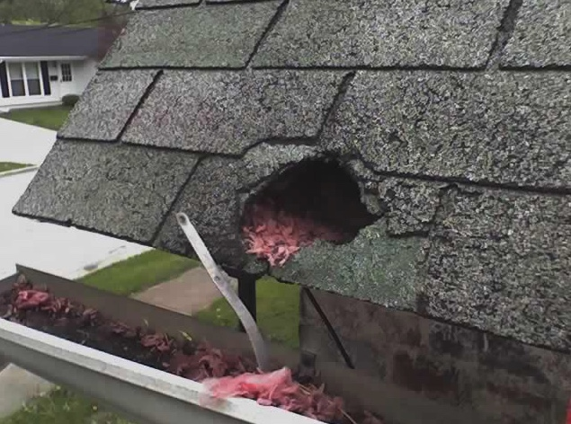 A raccoon damaged this roof. Notice the pink insulation pulled out into the gutter.