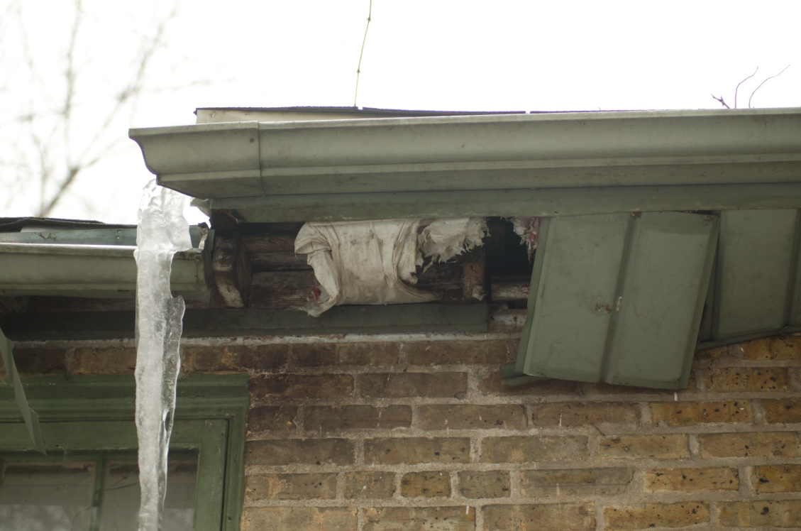 A raccoon found a small hole in the soffit and enlarged it so that it could access the house.