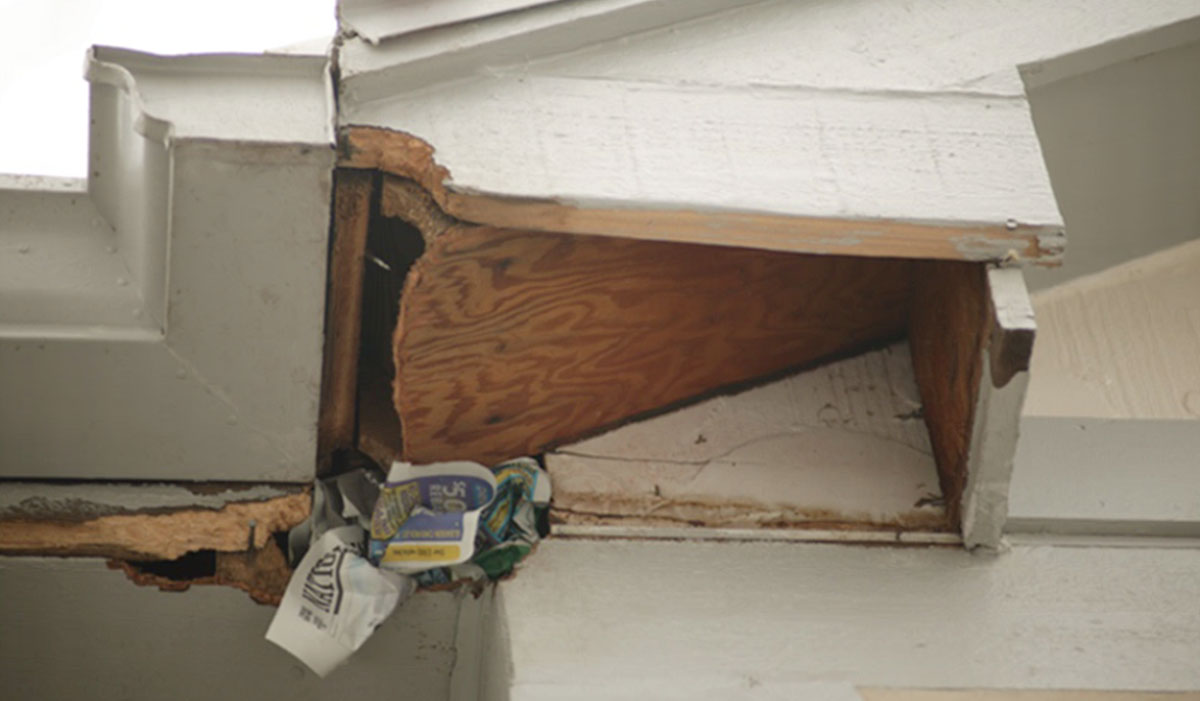 Newspaper was loosely stuffed into the hole in this damaged soffit to see if the animal was still getting into the house. Some of the paper was removed from the hole by the squirrel, letting the homeowner know an animal was still gaining access.
